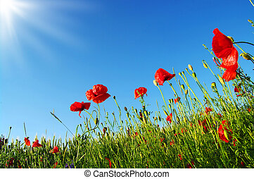 rouge clair, coquelicots