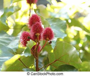 rouge lèvres rouge, arbre, fleurs, dans, ensoleillé,...