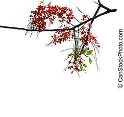 rouges, rempli, fond blanc, branche, isolé, fleurs, arbre