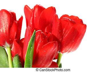 rouges, tulipes, contre, blanc
