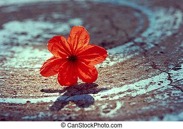 rouges, vendange, fleur