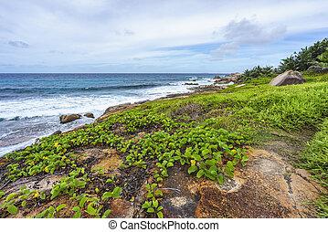 Rough and wild rocky coastline at anse songe, la digue, seychelles 11