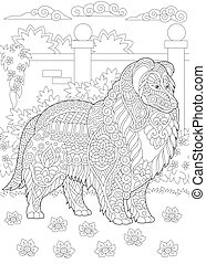 Rough Collie dog - Rough Collie. Shetland Sheepdog or ...