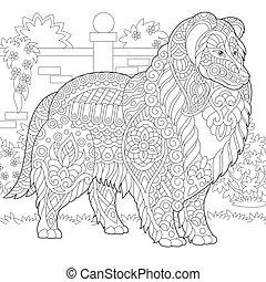 Rough Collie dog. Shetland Sheepdog or Sheltie. Coloring...