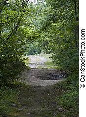 Rough dirt road (vertical format)