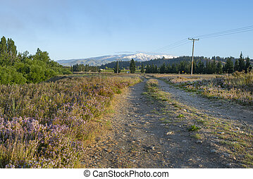 Rough dirt tracks or road bordered by wild thyme flower leads towards distant Southern Alps