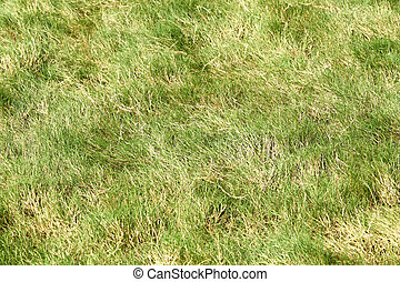 Rough grass in golf course