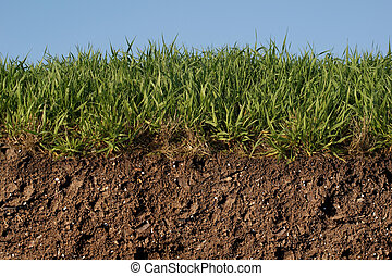 Rough Grass Profile Against Blue Sky