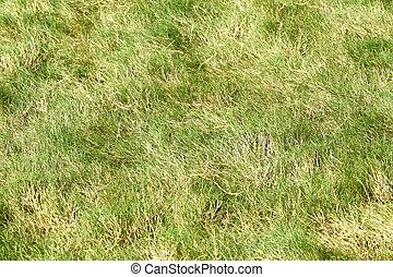 Rough grass in golf course