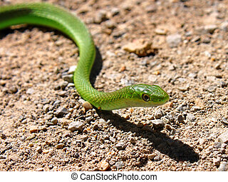Rough Green Snake Illinois Wildlife