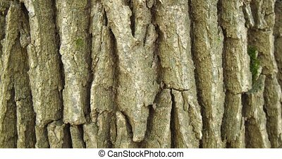 Rough Texture of Tree Bark in Extreme Closeup - Extreme ...