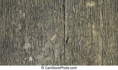 rough wood texture, close-up, camera in motion