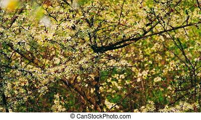 rouleau, arbre, fleurir, b, yard