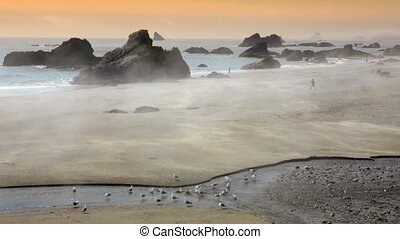 rouler, brouillard, plage