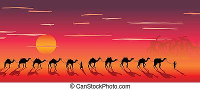roulotte, di, cammelli, in, il, deserto