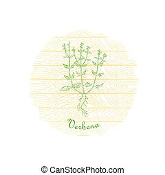 Round Badge with Contour Vervain Plant and Plank Wooden Background. Verbena Plant Name Bent by the Badge Shape. Label for Traditional Herbal Medicine, Cosmetology, Food Industry.