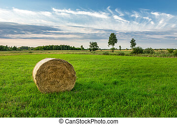 Round bale of hay on the meadow
