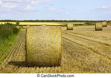 round bales in a stubble field at harvest time in summer
