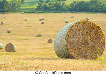 round bales on hilly field; Schuyler, Nebraska