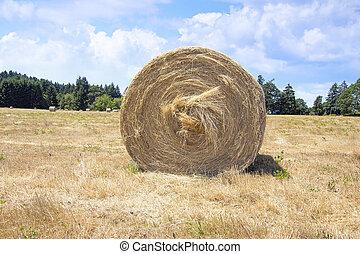 Round Bales of Hay Closeup