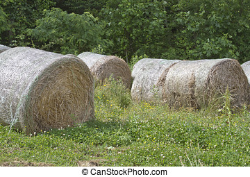 Round Bales of Hay in a Field