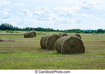 bales of hay in the field