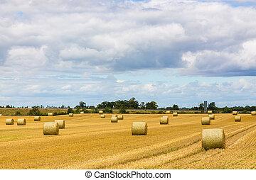 Round bales of hay spread out on Irish farmland