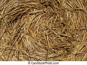Round bales of straw lying in the field, shot taken close-up.