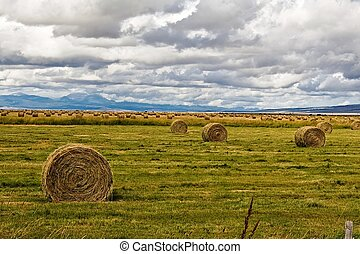 Round bales of hay in a ranch meadow.