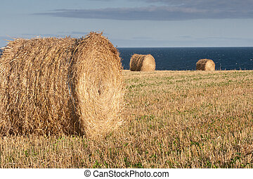 Round hay bales in a field in prince edward island