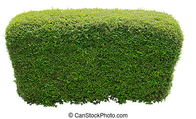 Round bush - Bush trimmed into round shape