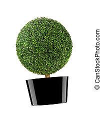 round bush isolated on white