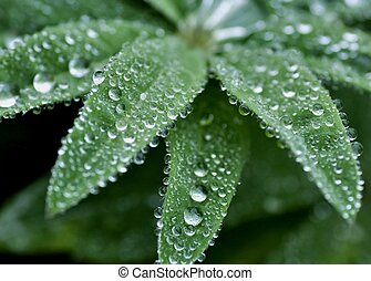 round dew drops on green plant leaves