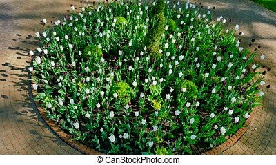 round flowerbed with tulips and bush