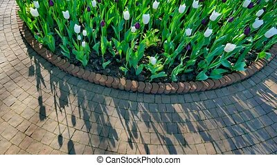 round flowerbed with tulips and bush.