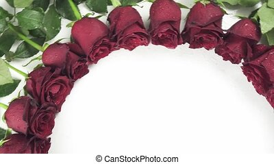 Round frame of red roses with water droplets on white background stock footage video