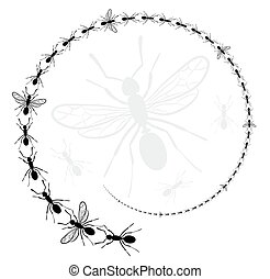 Round frame with ants.