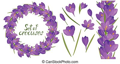 Round frame with beautiful lilac crocuses. Vector set of flower elements. Colorful image. flower elements. Colorful image.ound frame with beautiful yellow and lilac crocuses. Vector set of flower elements. Colorful image.