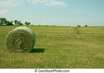 round hay bales are on a field after making hay
