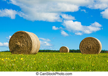 Round hay bales in a green field