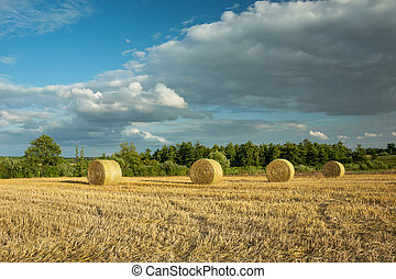 Round hay bales in the field and clouds on the sky