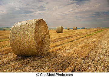 Round hay bales in the field and cloudy sky