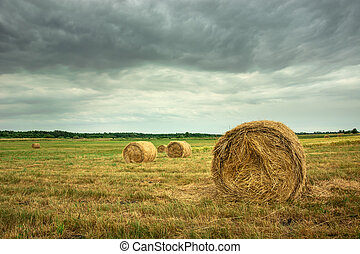 Round hay bales in the field and dark clouds.