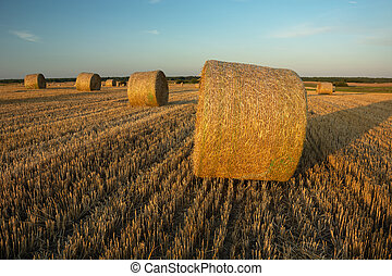 Round hay bales in the field, horizon and evening sky