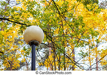 Round lantern on background of branches with yellow autumn leaves