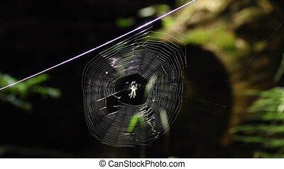 spider web - round spider web with spider