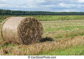 Round straw bale in the meadow