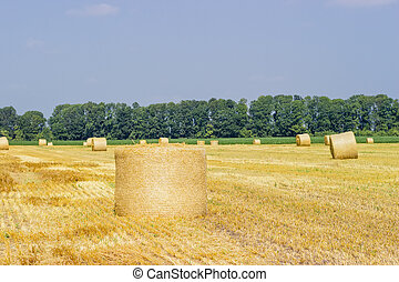 Round straw bale lying on the side on harvested field