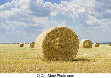 Round straw bales on harvested field on background of sky