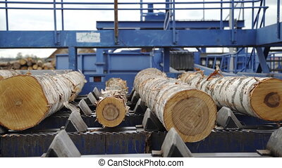 Round timber logs preparation sorting processing at sawmill...